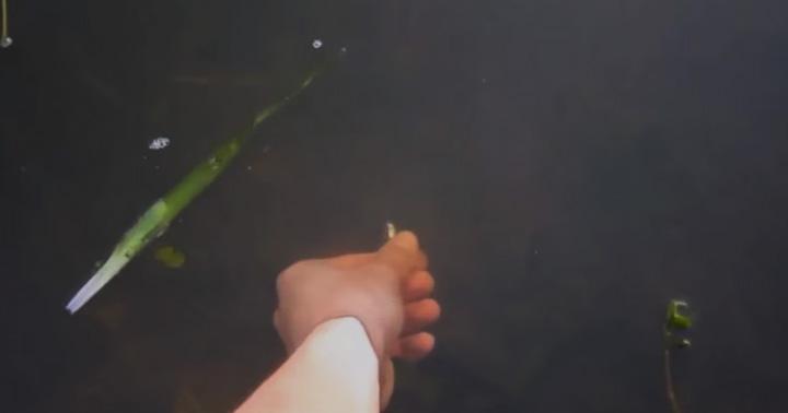 道具を使わずに手だけブラックバスを釣る動画イメージ