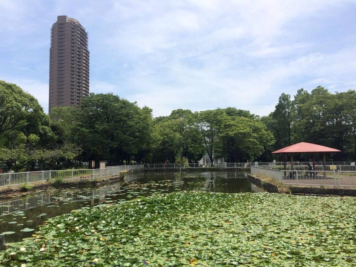 猿江恩賜公園の北側の池