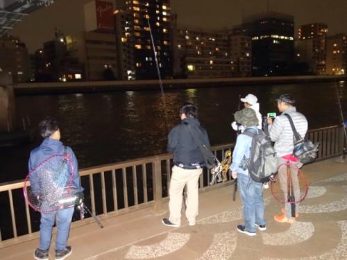 隅田川でシーバスを狙う